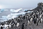 Antarctica photos 2 615