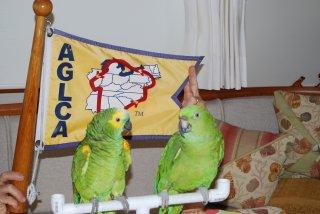 looper-birds