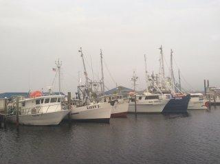panama-fishing-fleet