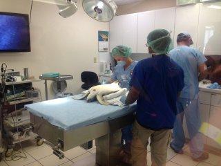 turtle-hospital