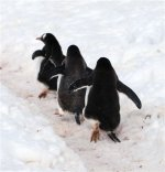 Antarctica photos 2 1249