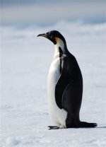 Antarctica photos 2 155
