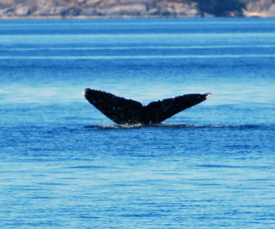 whale-tail-2
